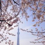 「それぞれの春」心と表現<第3回>熊澤南水|月刊浅草ウェブ
