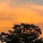 浅草誌半世紀・名随筆の足跡<第3回・寺内大吉「焼けトタンと赤とんぼ」>月刊浅草ウェブ